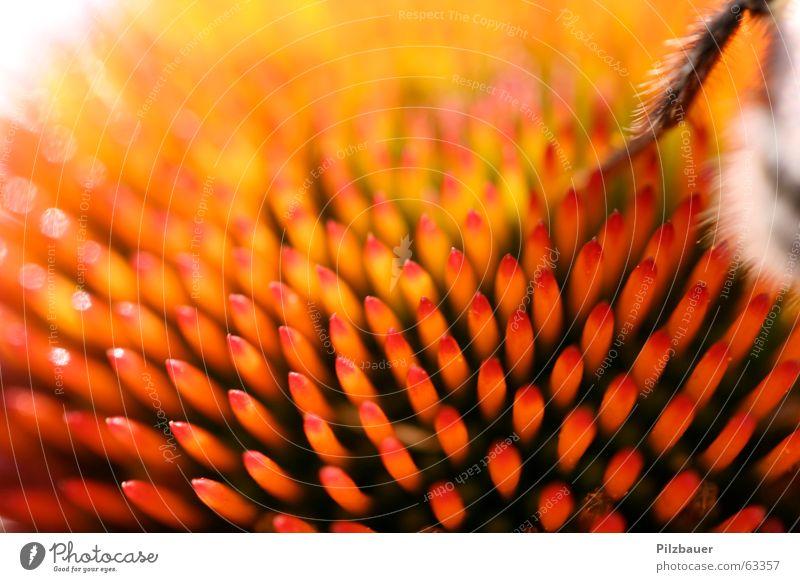 AUA Flower Bumble bee Orange Macro (Extreme close-up) near name Point Life Joy dof