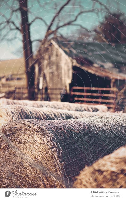 country life in Virginia Nature Landscape Winter Beautiful weather Field Cold Barn Hay bale Rural Farm Shabby Storage Round Subdued colour Exterior shot