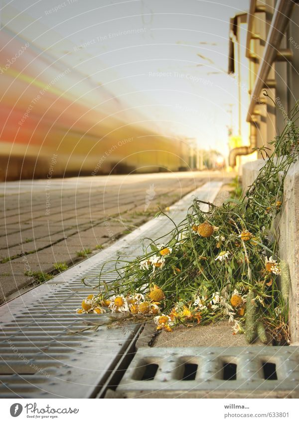Flower Going Speed Bouquet Goodbye Limp Drainage Platform Chamomile Train travel Rail transport Throw away