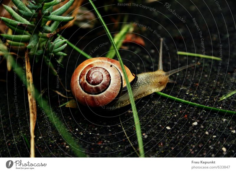 Obstacle race. Plant Animal Grass Wild animal Snail Snail shell 1 Esthetic Brown Green Crawl Slowly Slow motion sedate Single-minded Asphalt Patient Garden