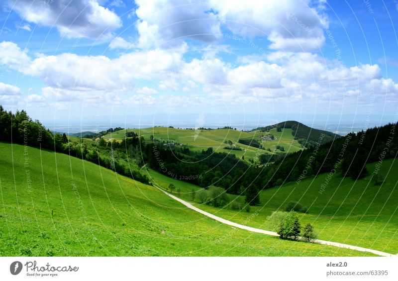 Sky Green Clouds Forest Mountain Lanes & trails Landscape Germany Large Tall Vantage point Technology Idyll Hill Black Forest Freiburg im Breisgau