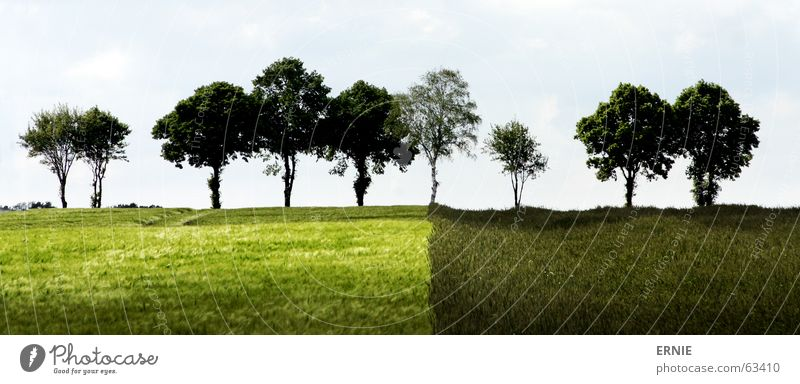 Böömsche Tree Field Agriculture Grass Green Light Clouds Difference Germany Symetric strange Nature Shadow Sky