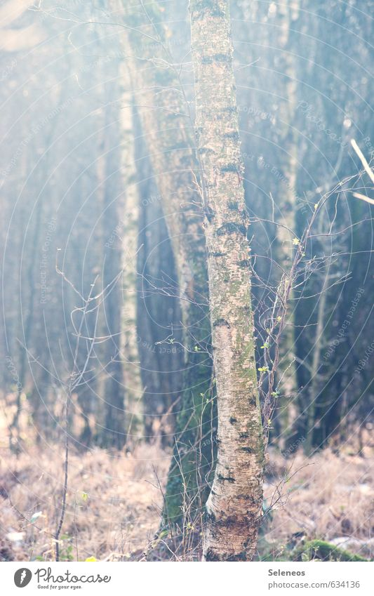 birgit Environment Nature Landscape Plant Autumn Winter Tree Grass Bushes Moss Forest Natural Birch tree Colour photo Exterior shot Deserted Day Light Shadow