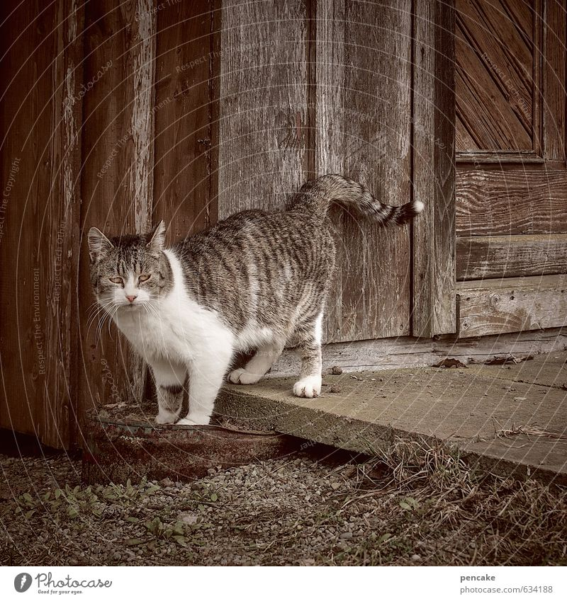 loner   in Hut Stairs Door Animal Cat 1 Sign Esthetic Authentic Free Town Warmth Feminine Loneliness Uniqueness Individual Tabby cat Independence Modest