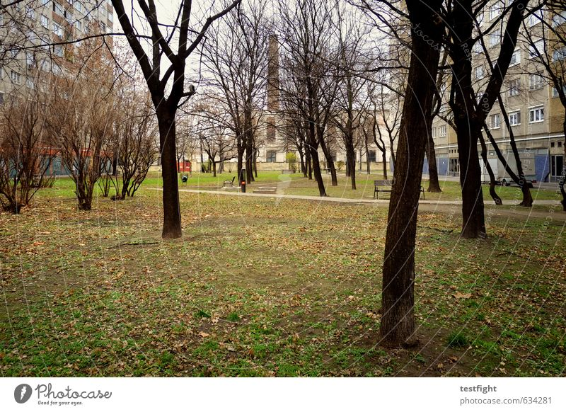 some kinda trees Tree Garden Park Meadow Town Capital city Outskirts Deserted Living or residing Gloomy Loneliness Cold Boredom Life Prefab construction