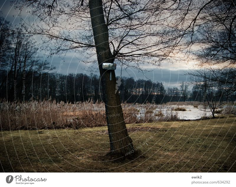 flashback Environment Nature Landscape Plant Sky Clouds Horizon Climate Weather Beautiful weather Tree Grass Forest Pond Dark Mirror Safety Twigs and branches