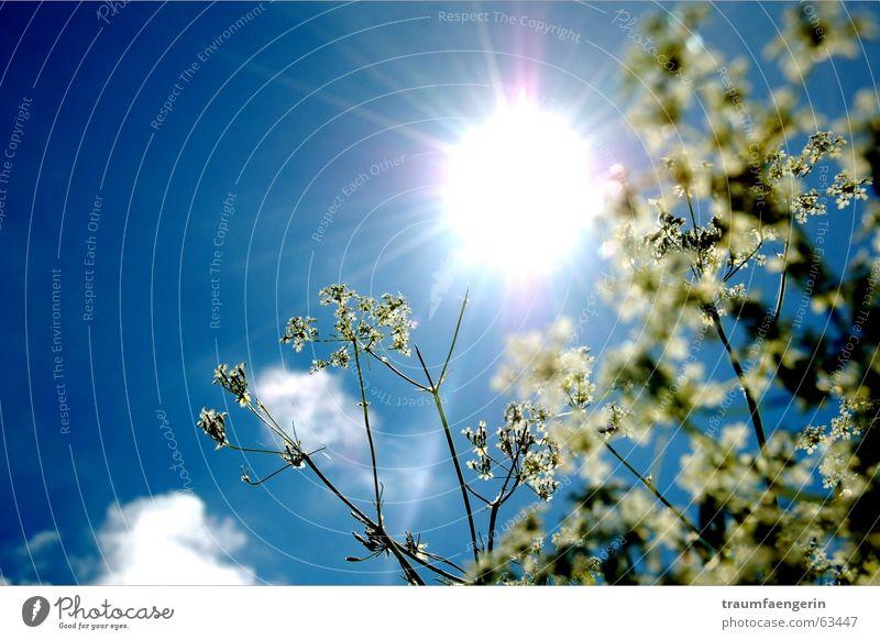 enjoy the sun Flower Green White Clouds Light Dazzle Diagonal Joy Auvergne France Sun Sky Happy Blue Lie Empty All