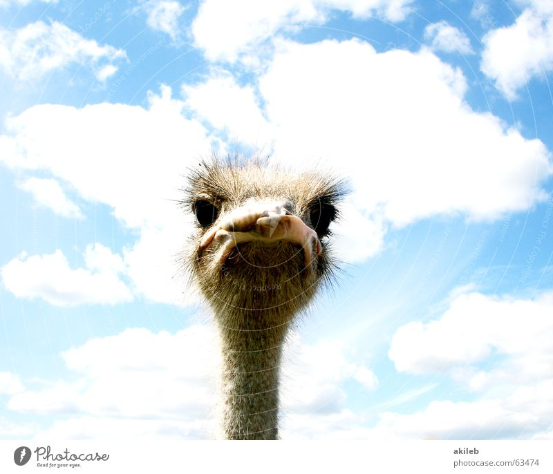 Always keep beautiful eye contact Clouds Looking Whim Earnest Curiosity Observe Bad mood Trenchant Evil Animal Bird Bouquet Sky Eyes Interest Police state