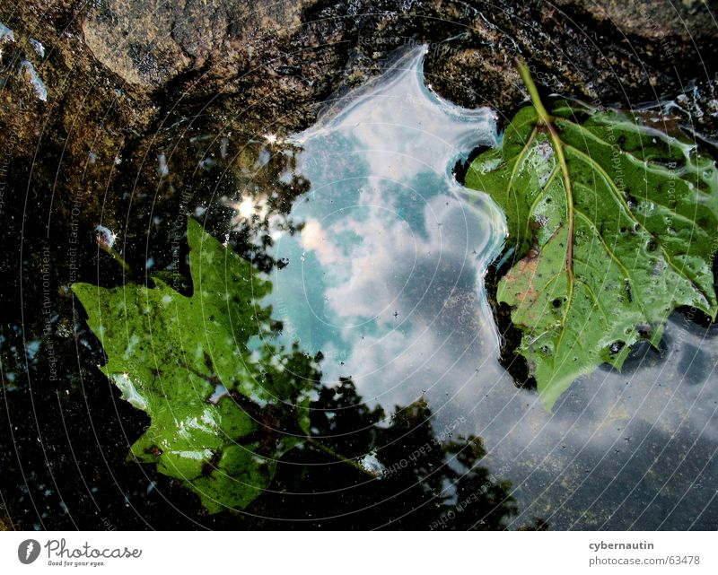 Nature Water Sky Leaf Clouds Stone Rain Weather Beginning Hope Future End Transience Decline Puddle Poetic