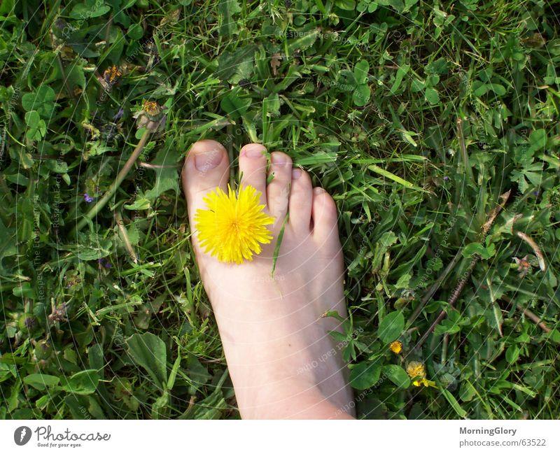 finally spring Summer Spring Meadow Flower Dandelion Lawn Feet