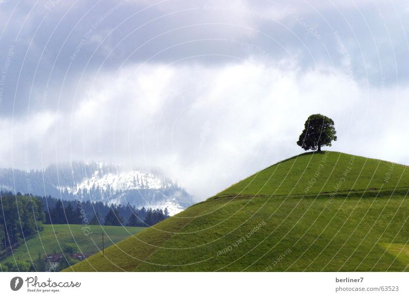 Who planted it.... Individual Tree Hill Meadow Grass Green Clouds Mountain Alps Snow