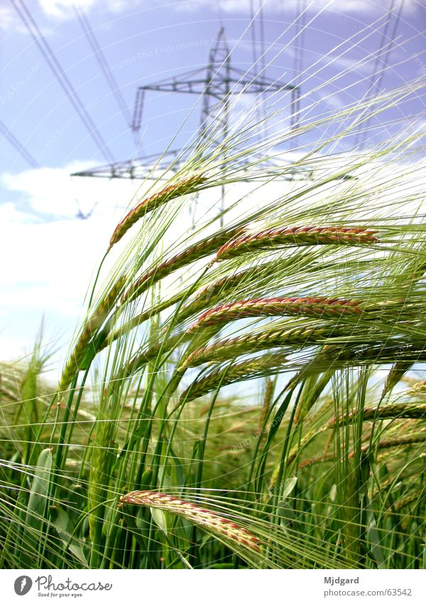 energy carriers Field Electricity Green Energy industry Electricity pylon Grain Blue Power