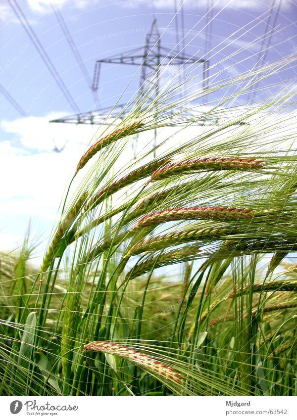 Green Blue Power Field Energy industry Electricity Grain Electricity pylon
