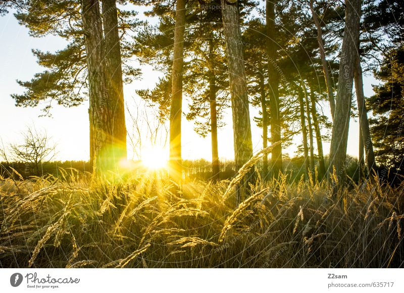 Nature Sun Tree Relaxation Landscape Calm Forest Environment Warmth Autumn Grass Leisure and hobbies Idyll Bushes Climate Fresh