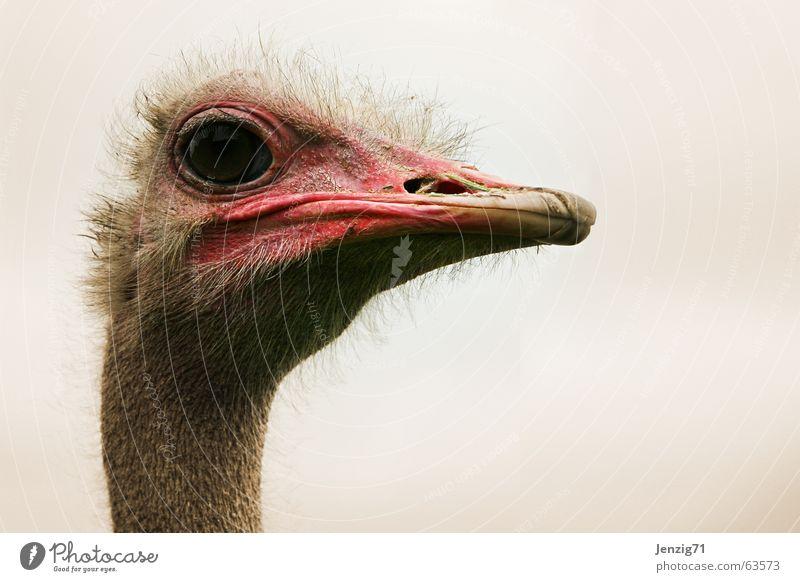 Eyes Bird Observe Bouquet Beak Animal Flightless bird
