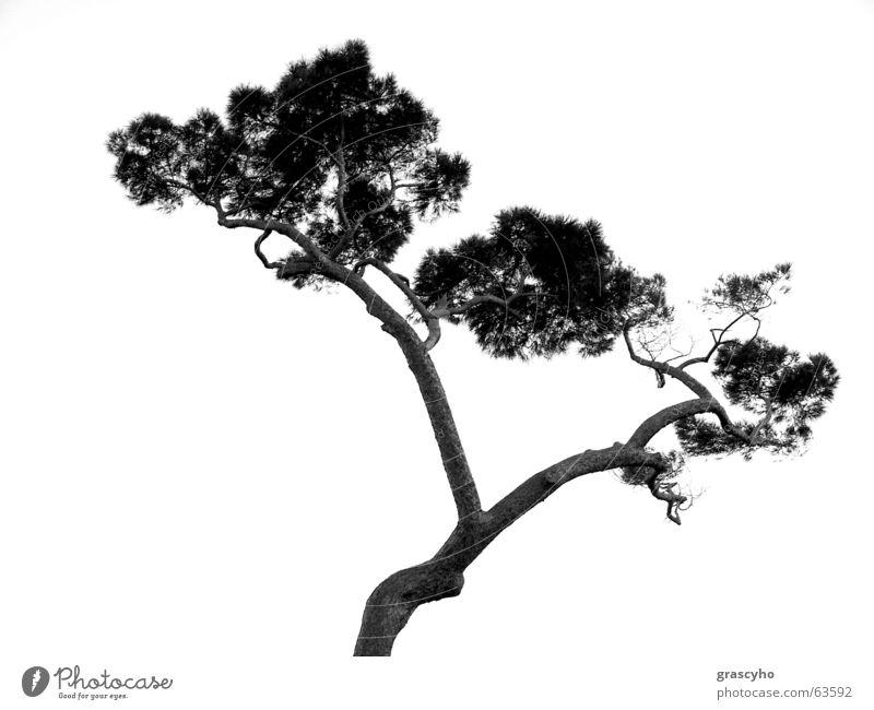 TREE Tree Wood flour agac bitki plant.growth.herb dal branch siluet