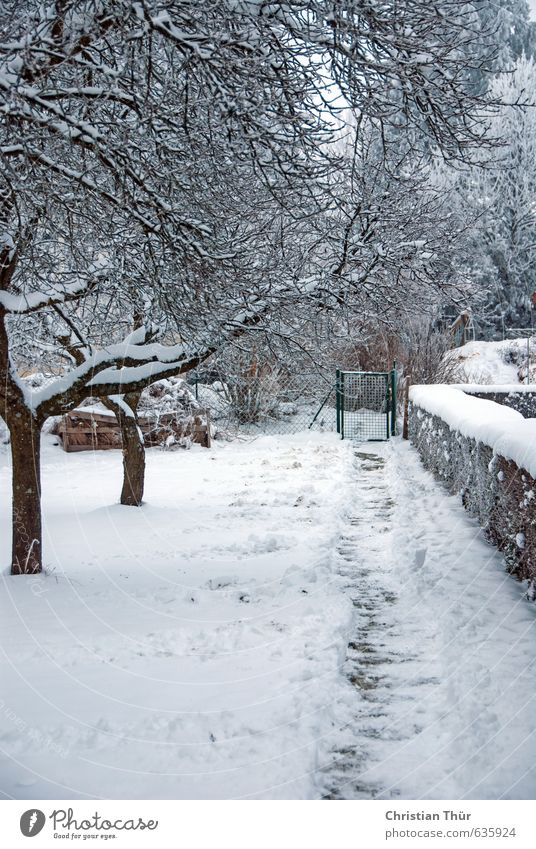 Garden path in winter Vacation & Travel Trip Winter Snow Winter vacation Relaxation Freeze Brown White Emotions Leisure and hobbies Joy Cold Senses Style Moody