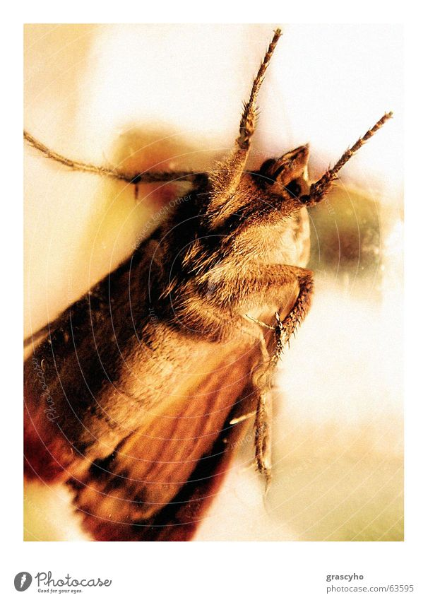 Insect Beetle Moth