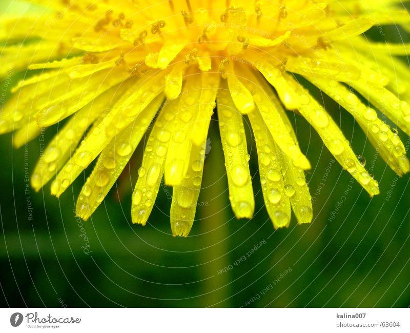 the little half-sun Flower Yellow Nature