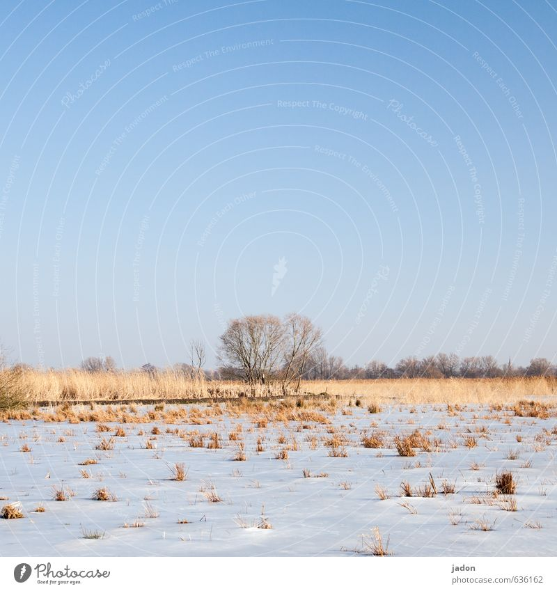 a hell of a long time ago. Calm Snow Landscape Plant Earth Sky Cloudless sky Spring Winter Beautiful weather Ice Frost Tree Grass Foliage plant Meadow Field