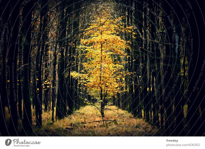 Nature Beautiful Plant Tree Forest Yellow Environment Autumn Funny Healthy Art Glittering Power Elegant Illuminate Large