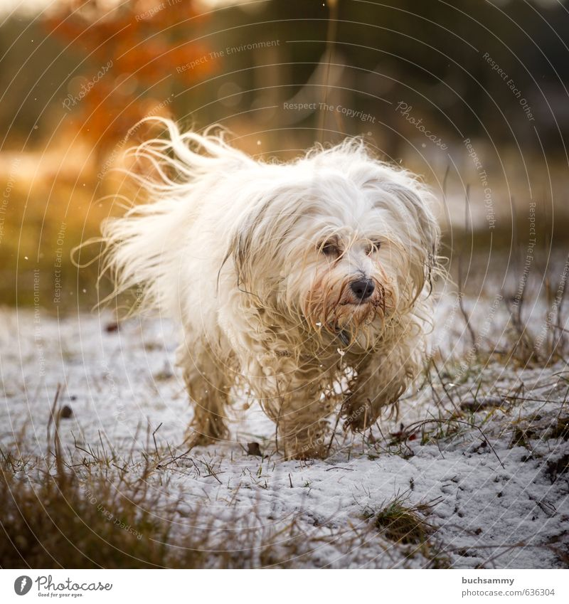 Dog Nature White Joy Animal Warmth Emotions Snow Movement Grass Small Going Germany Orange Contentment Perspective
