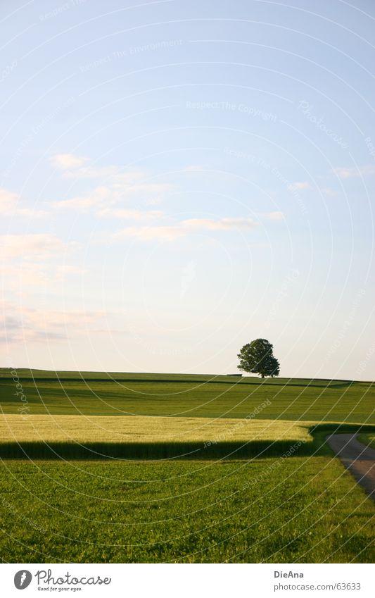 Nature Sky Tree Green Blue Yellow Meadow Lanes & trails Warmth Field Harmonious Evening sun June Hayfield