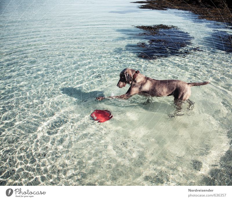Dog Vacation & Travel Water Summer Ocean Relaxation Joy Animal Funny Swimming & Bathing Freedom Brown Leisure and hobbies Fresh Beautiful weather Happiness