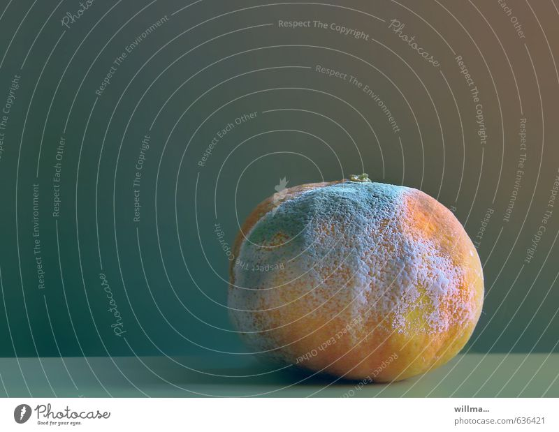 furry Fruit Tangerine Disgust Transience Mold moldy Spoiled Putrid Colour photo Interior shot Deserted Copy Space left Copy Space top