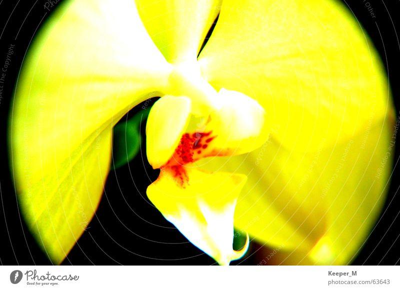blossom Flower Yellow SLR camera