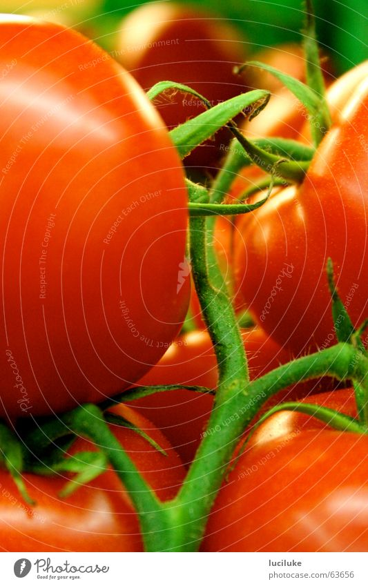 Food Vegetable Tomato