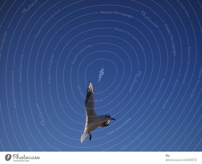 Sky White Blue Ocean Eyes Colour Gray Lake Bird Flying Beginning Feather Wing Trash Sudden fall Beak