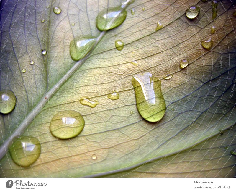 Nature Plant Blue Green Summer Water Leaf Autumn Rain Drops of water Drinking water Wet Grief Drop Distress Dew