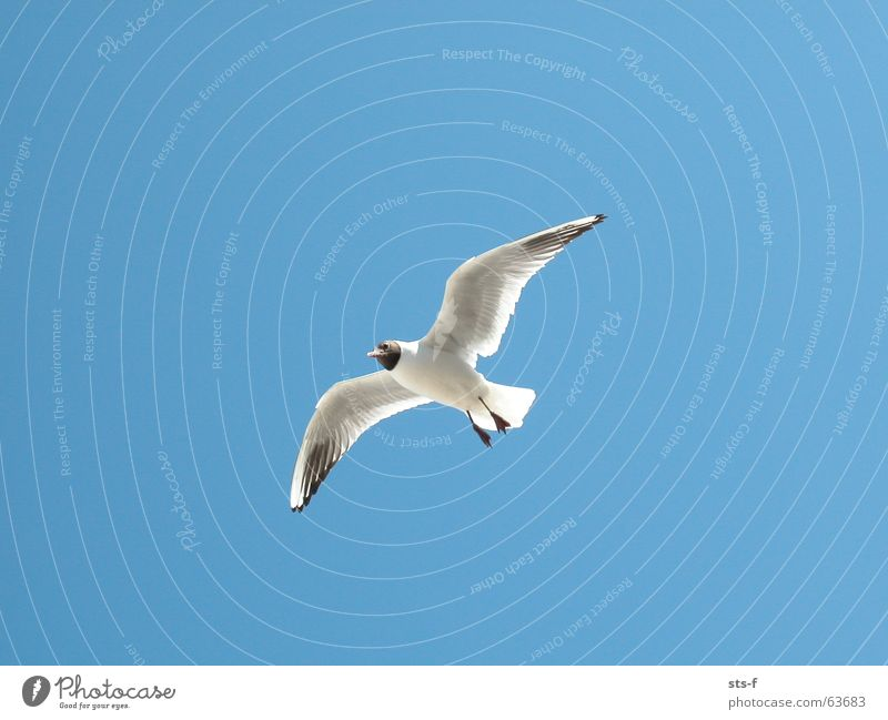 Sky Blue Summer Beach Animal Bird Wind Weather Flying Aviation Wing Seagull