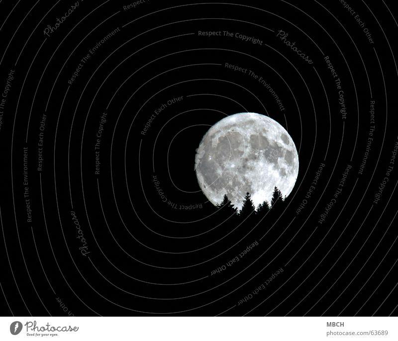 Tree Bright Lighting Fir tree Moon Go under Volcanic crater