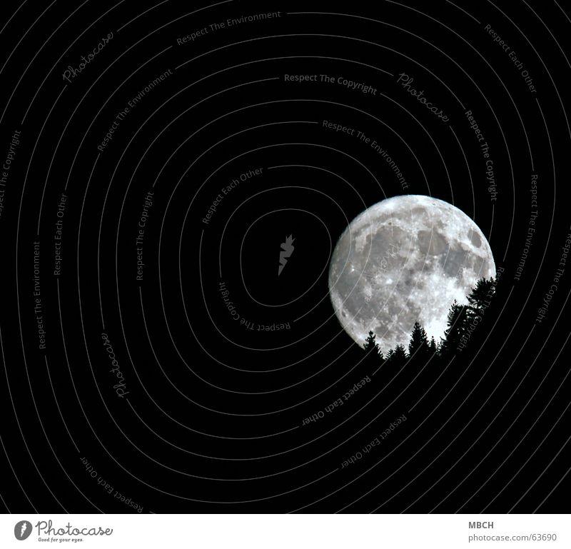 Moon 2 Tree Fir tree Lighting Pattern Volcanic crater Go under Bright