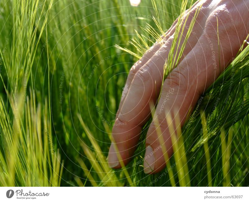 How does it feel ... Discern Touch Hand Fingers Summer Emotions Beautiful Experience Events Meet Painting (action, work) Erudite Plant Human being Senses