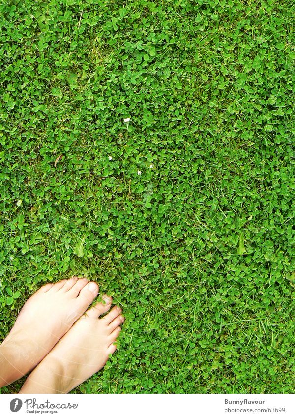 grass Grass Green Clover Leaf Feet Lawn