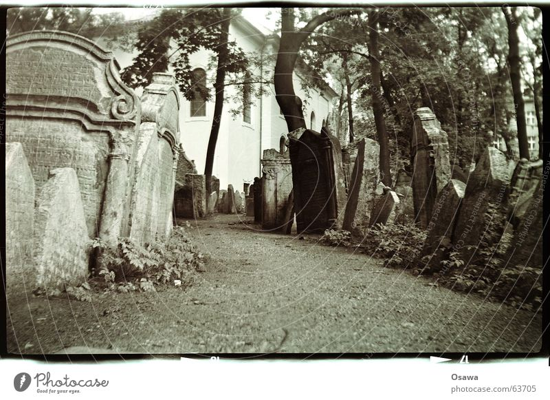 Tree Calm Death Lanes & trails Transience Grief Tree trunk Distress Alley Prayer Cemetery Grave House of worship To be silent Prague Tombstone