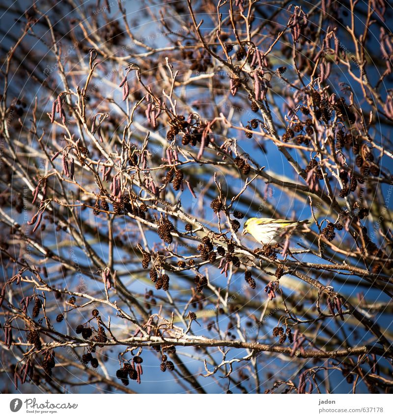 Sing bird. Stands Singer Plant Sky Spring Tree Leaf Field Animal Wild animal Bird 1 Sit Blue Optimism Love of animals Inspiration Songbirds Colour photo