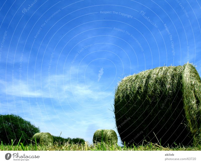 Nature Sky Green Blue Summer Calm Clouds Yellow Relaxation Meadow Warmth Field Round Agriculture Straw Bale of straw