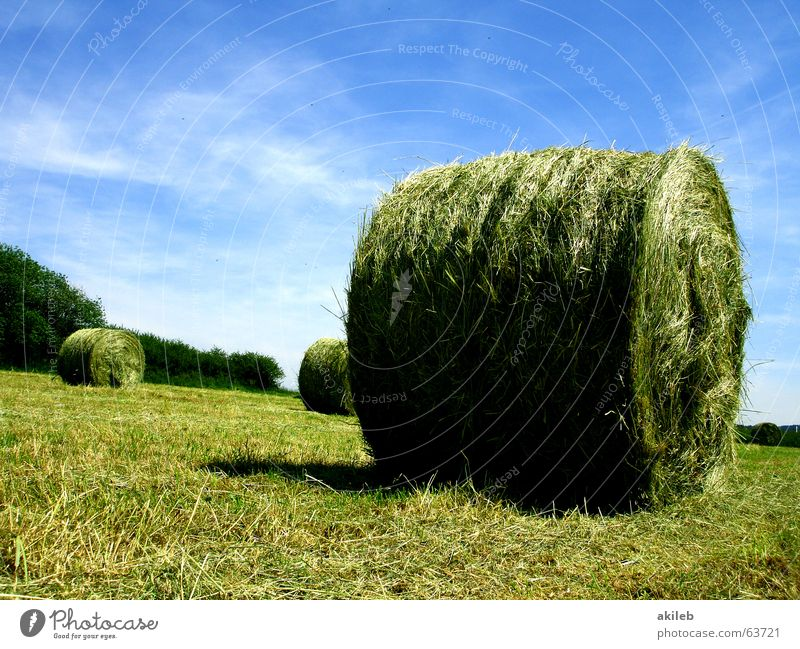 hay bales Straw Field Bale of straw Summer Calm Agriculture Meadow Hay bale Green Yellow Clouds Relaxation Round Sky Warmth Blue Nature