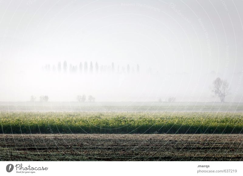 ground fog Environment Nature Landscape Earth Sky Horizon Summer Climate Beautiful weather Fog Tree Field Fresh Bright Moody Colour photo Subdued colour