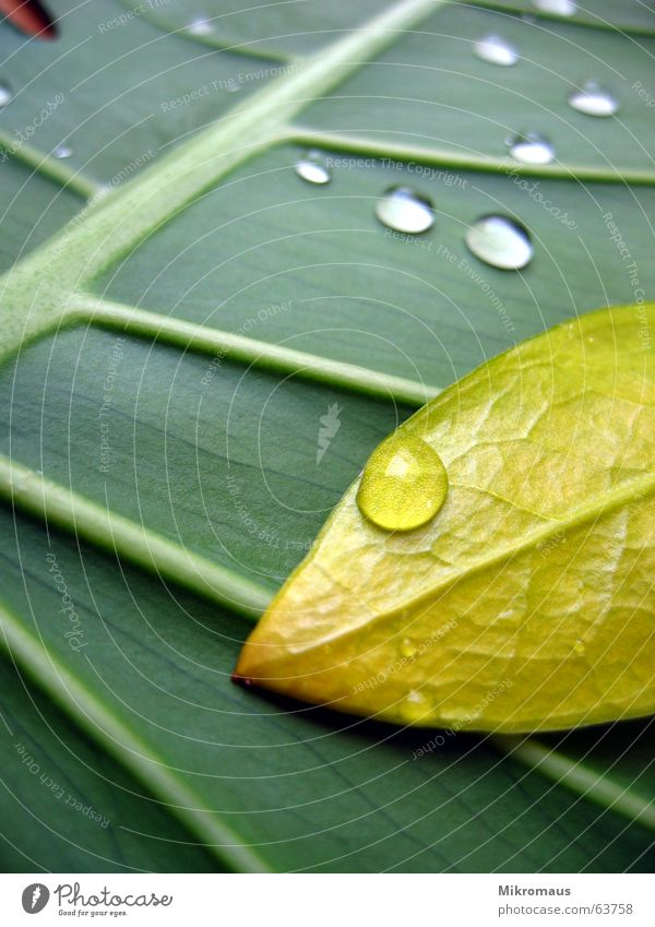 Nature Plant Green Summer Water Tree Leaf Yellow Autumn Lighting Rain Drops of water Drinking water Wet Stalk