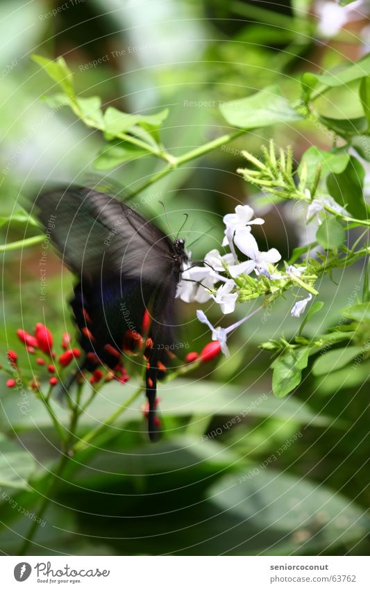 Butterfly motion Flower Tree Bushes Blossom Leaf Summer Insect Gravity Stamen Wing Feeler Search Find Nature Flying Movement Nectar Beautiful