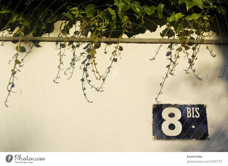 8BIS Street sign Ivy Plant Wall (building) Wall (barrier) Evening sun Sunset Paris eight Signs and labeling Shadow Mediterranean