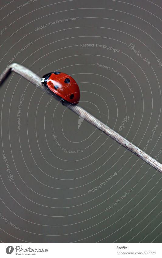 Nature Red Movement Gray Success Future Corner Target Insect Upward Career Beetle Crawl Go up Advancement Ladybird