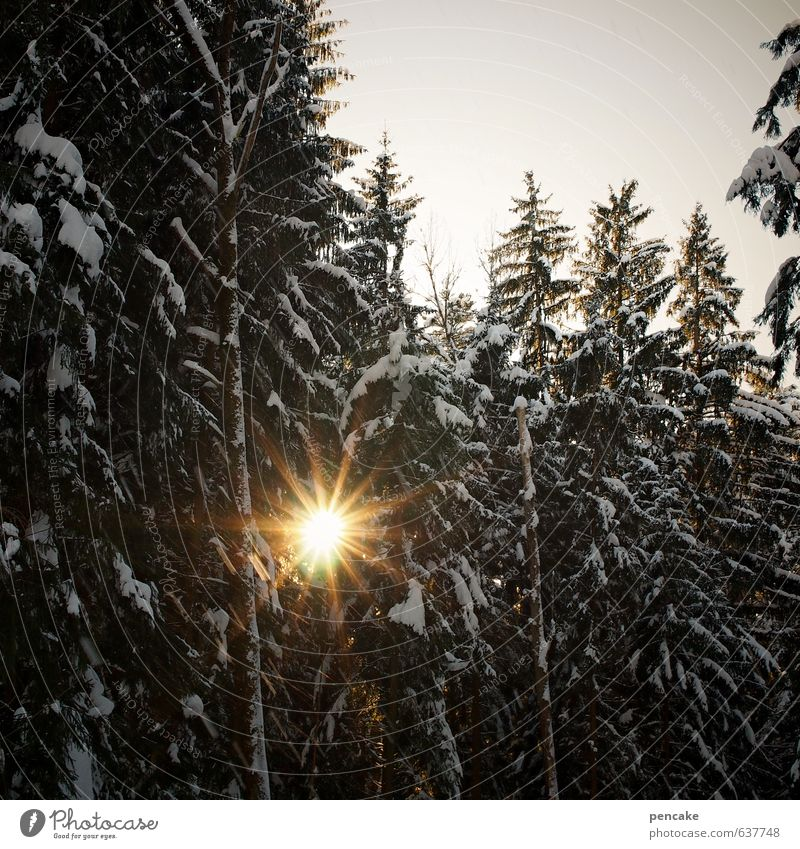Sky Nature Landscape Winter Forest Warmth Snow Spring Authentic Elements Star (Symbol) Sign Good Solar Power Forward-looking