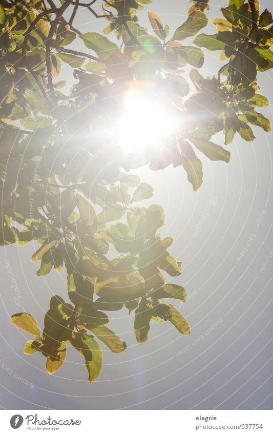 Sun rays through leaves Life Well-being Vacation & Travel Summer Nature Plant Cloudless sky Sunlight Spring Beautiful weather Tree Leaf Breathe Relaxation