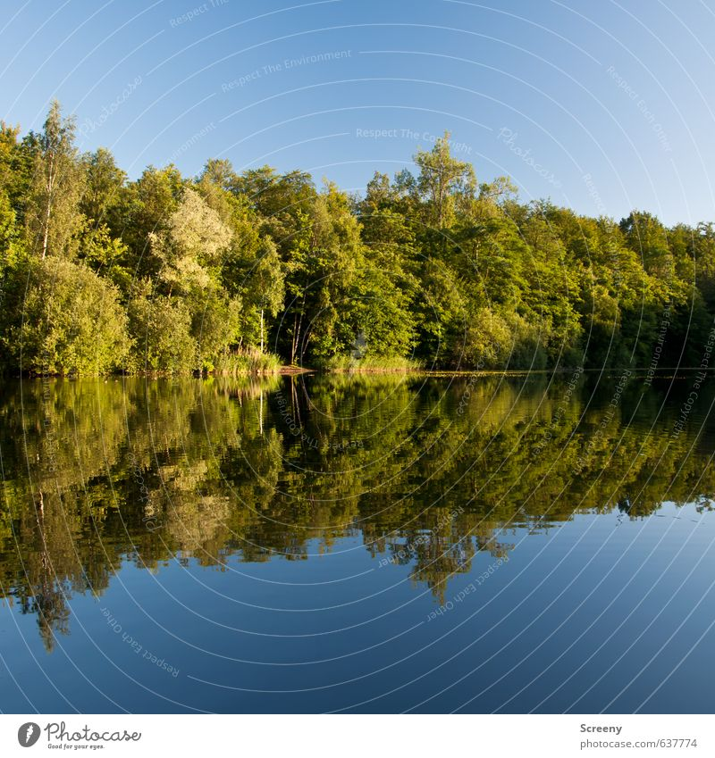 Mirror mirror... Nature Landscape Water Sky Cloudless sky Summer Beautiful weather Tree Bushes Forest Lakeside Pond Blue Green Moody Serene Patient Calm